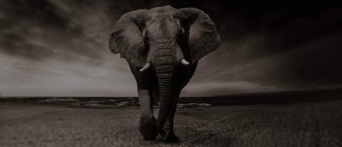 Value creation & charging for it, an elephant in the reinsurance room